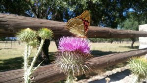 English and hiking: Butterfly