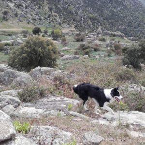 Senderismo con perros por Zarzalejo