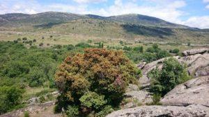 Senderismo bélico-rural por Zarzalejo con El Caminante y su Sombra