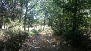 Senderismo por el Castañar de las Rozas con El Caminante y su Sombra
