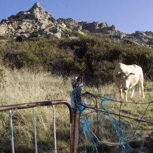 Senderismo a la sombra de Los Porrones de Mataelpino a El Boalo con El Caminante y su Sombra
